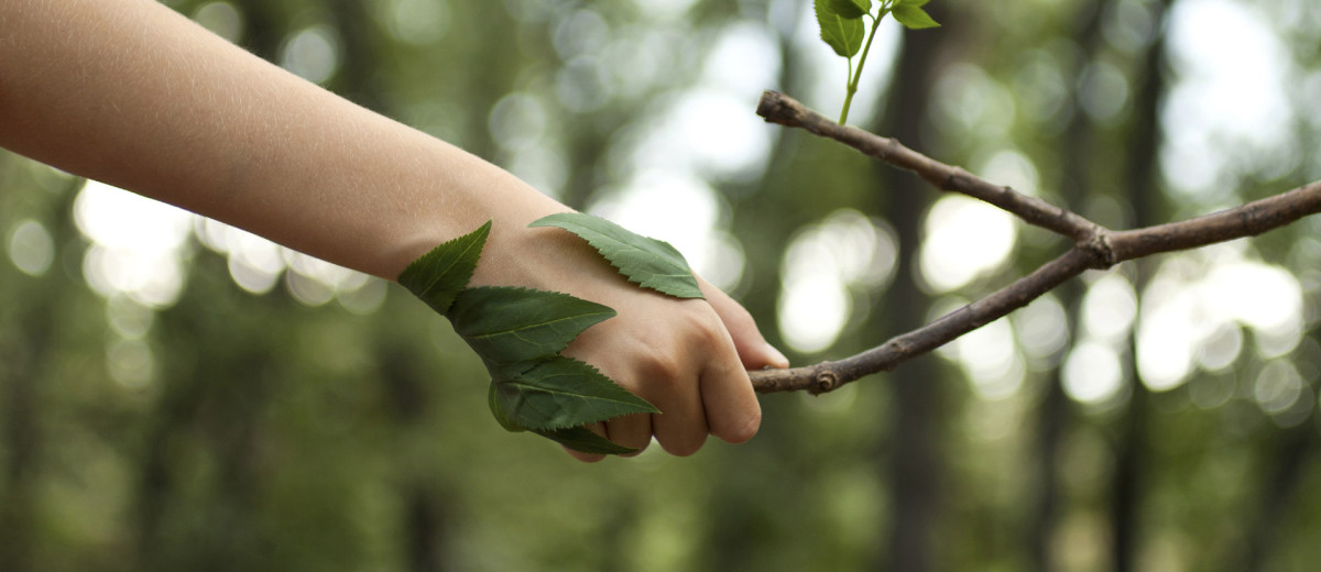 Qué deben las organizaciones considerar a la hora de diseñar su plan de sostenibilidad